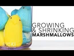 Growing And Shrinking Growing And Shrinking Marshmallows 132