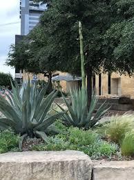 the garden post barbara segall garden bloggers fling austin texas 2018