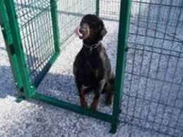 Recinzioni Da Giardino In Metallo : Recinzioni cani come realizzare le per