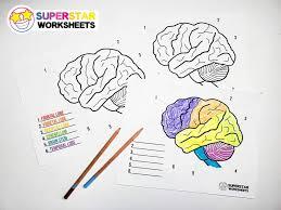 We have hundreds of kids craft ideas, kids worksheets, printable activities for kids and more. Human Brain Worksheets Superstar Worksheets
