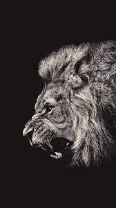 wallpaper iphone, Lion wallpaper, Lion ...