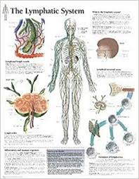 The Lymphatic System Chart Laminated Wall Chart Scientific