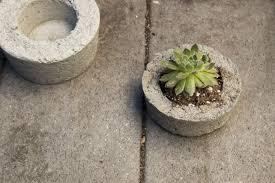 diy concrete planters budget gardenista 733x489