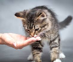 this makes the topic of the best kitten treats for training one that every kitten owner is naturally very interested in