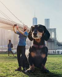 oversized dog is teaching kids how to cope when moving to a new city this oversized dog is teaching kids how to cope when moving to a new city