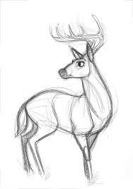 Sketches Animal Pin By Kat On Doodling Creature References Pinterest Drawings