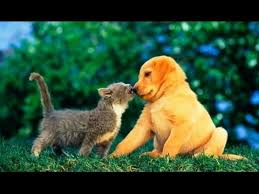 cute puppy and kitten best friends. Puppies And Kittens Best Friends Compilation With Cute Puppy Kitten YouTube
