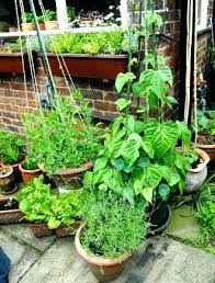 growing a patio vegetable garden best soil for growing vegetables in pots container gardening growing patio growing a patio vegetable garden
