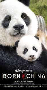 Quotes About Pandas Enchanting Born In China 48 IMDb