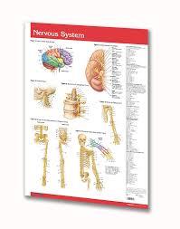 Cranial Reflexology Chart