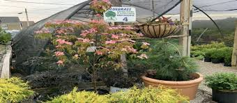 bluegrass garden center elizabethtown