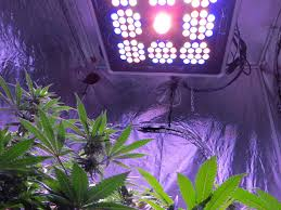 How Close To Keep Led Grow Lights How Far Should Grow Lights Be From Cannabis Plants Grow