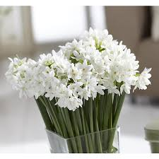 Paper White Flower Bulb 6 Count Paperwhite Narcissus Bulbs At Lowes Com