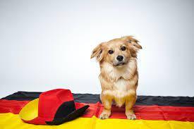 犬 の 名前 英語