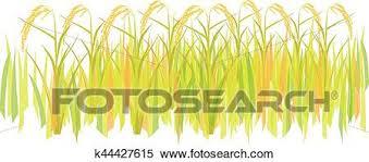 rice plant clipart. Fine Clipart Clipart  Rice Plant Vector Design Fotosearch Search Clip Art  Illustration Murals On Rice Plant C