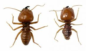 Pest Dropping Identification Chart How To Identify Indoor Insects By Droppings Sciencing