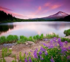 Full Hd Nature Wallpapers For Android ...