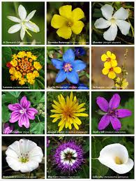 Flower Chart In English Flower Wikipedia