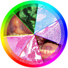 A Rainbow Of Colors And Spectrum Of Textures An Approach To Oral
