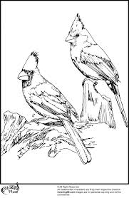 Small Picture Cardinal coloring pages wwwbloomscentercom