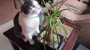 [CAT] - Kitty Eats Plants 2