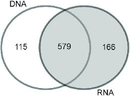 Compare Dna And Rna Venn Diagram Venn Diagram Of The Otu Overlaps Between The Dna And Rna
