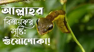🔰 সৃষ্টিতে স্রষ্টার নিদর্শন ||পর্ব:০২|| আলোচ্য বিষয়: শুঁয়োপোকা! ||  Amazing C. the believer bangla - YouTube