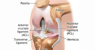 torn meniscus treatments physical