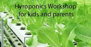 hydroponics work for kid and pa in singapore holiday