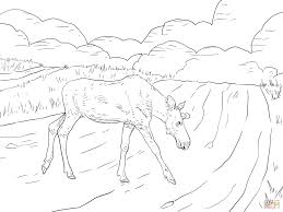 Small Picture Moose Crossing a Road coloring page Free Printable Coloring Pages