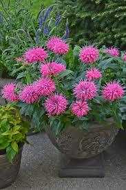 Best 25 Blue Garden Ideas On Pinterest  Blue Plants Blue Container Garden Plans Flowers