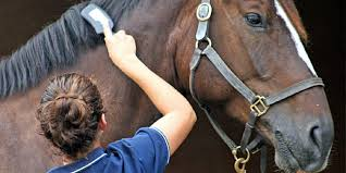 the horses and ponies also favor a smooth brush called brush this brush helps to remove the entire filth from the animal s coat
