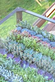 Small Picture 263 best garden images on Pinterest Landscaping Backyard ideas