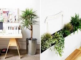 Piante, fiori freschi e la presenza in generale del verde in ufficio o in azienda, oltre a svolgere una funzione decorativa, sono utili per valorizzare e. Piante Appartamento Piante Appartamento Come Scegliere Le Piante Da Appartamento