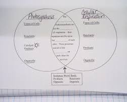 cellular respiration and photosynthesis essay order essay online
