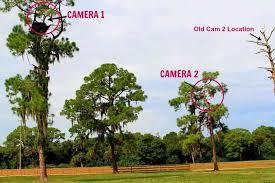 pritchett eagle cam. Beautiful Eagle Camera Locations Intended Pritchett Eagle Cam G