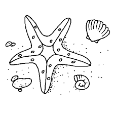 Small Picture coloring page starfish
