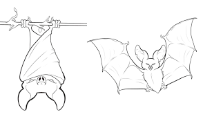 Small Picture Coloring Pages Draw A Bat olegandreevme