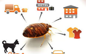 Get Bed Bugs In Upholstered Headboard Images