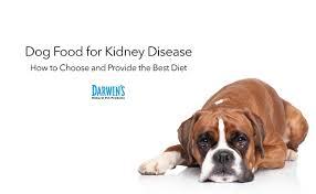 non prescription low phosphorus cat food. Non Prescription Low Phosphorus Cat Food I