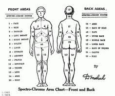 Body Injury Chart 37 Best A P Musculoskeletal System Body Charts Images