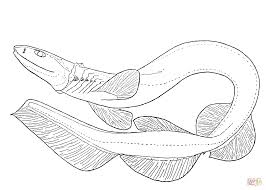 Small Picture Frilled Shark coloring page Free Printable Coloring Pages