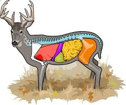 Deer Vitals Chart Here Is The Best Vital Diagram I Have Seen It Even Has What