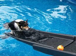 swim learnings