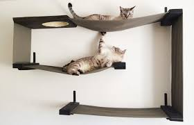 Diy cat playhouse Build Two Cats Playing In Catwallshelves Catspro Diy Cat Shelves Easytofollow Guide Experts Advice