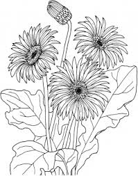Small Picture Daisy Flower Coloring Pages More colorings from daisy category