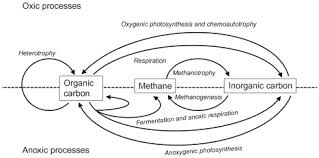 Carbon Cycle Flow Chart Carbon Cycle An Overview Sciencedirect Topics