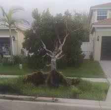 Post-Irma, Reasons for Thanksgiving in Florida
