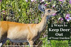 137 Best Fruiting Trees Shrubs U0026 Vines Images On Pinterest Keep Deer Away From Fruit Trees