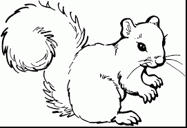 Small Picture extraordinary squirrel coloring page with squirrel coloring pages